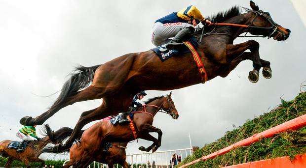 2018 BetVictor Gold Cup Free Tips and Trends